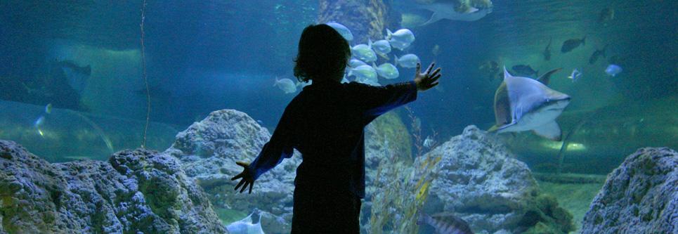 main_aquarium-window