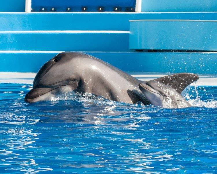 SEAWORLD golfinho