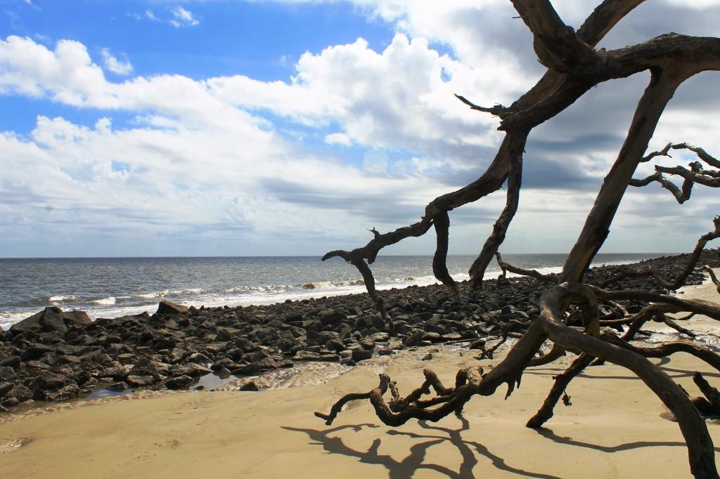 Driftwood Beach Foto por Eliria Buso