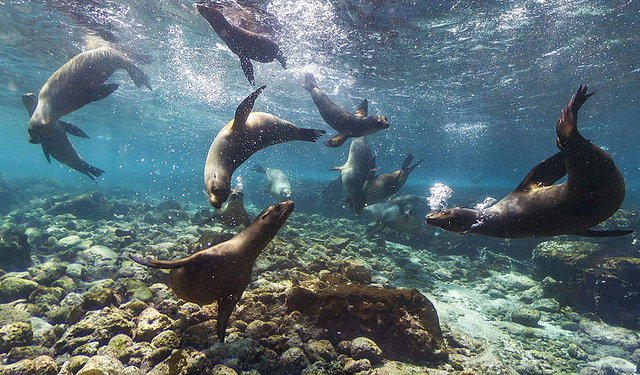 Galapagos crédito Flick Adam Rifkin