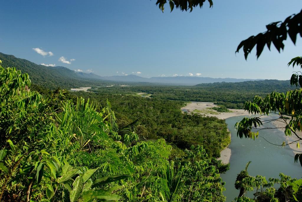 floresta Amazônica common wik