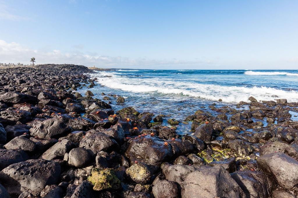 Costa_de_isla_Santa_Cruz,_islas_Galápagos,_Ecuador,_2015-07-26,_DD_50