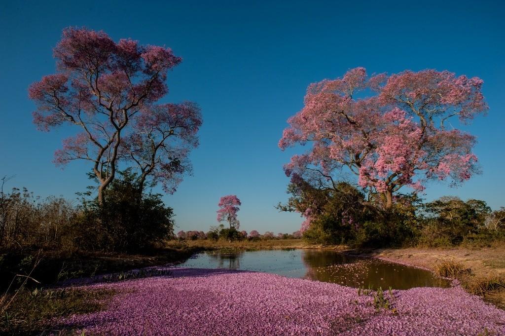 Pantanal-Foto José Medeiros-9649
