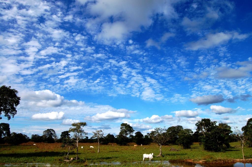 Pantanal004 - Foto Andressa Volpini