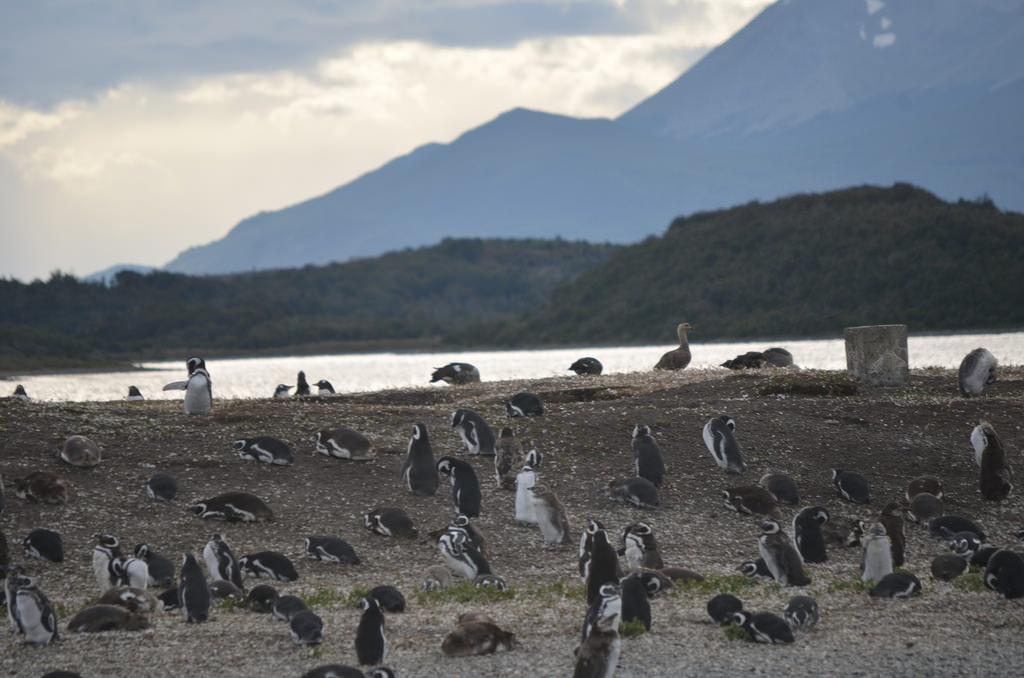 Rodrigo Soldon 2 pingüinos terra do fogo