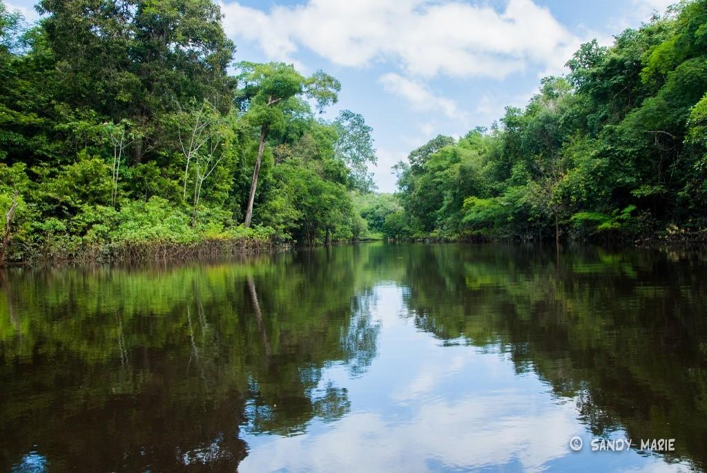 Resultado de imagem para floresta amazônica
