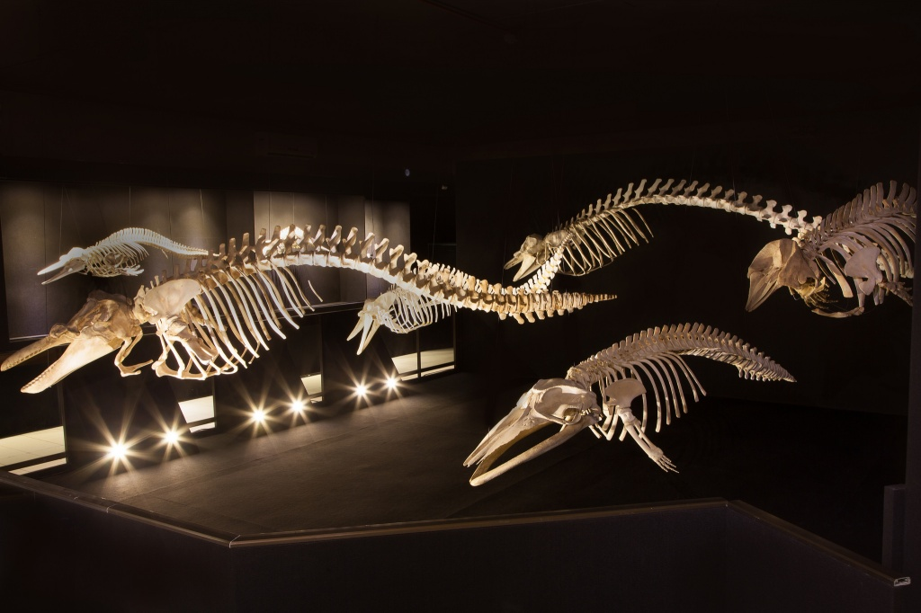 museu oceanografico2