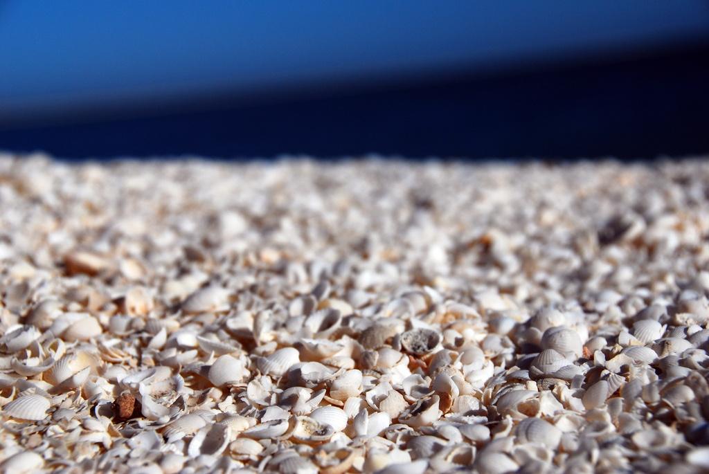 shell beach australia robert young via flickr praias curiosas