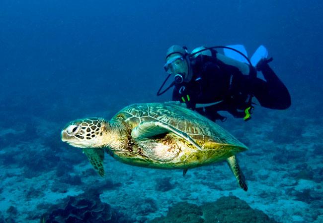 03_Turtle