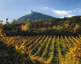 vinhos tchecos