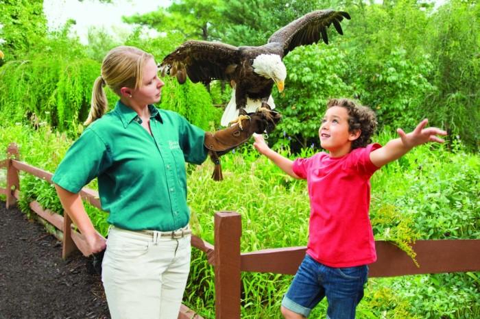 BGW Eagle