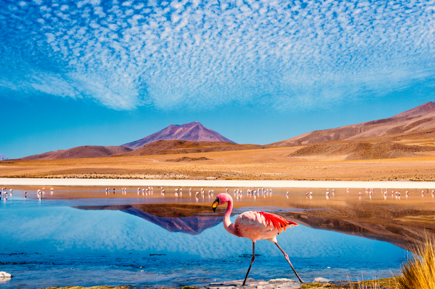 "Laguna at the ""Ruta de las Joyas altoandinas"" in Bolivia with pink flamingo walking through the scene"