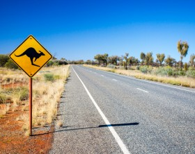 An iconic warning road sign for kangaroos near Uluru in Northern Territory, Australia