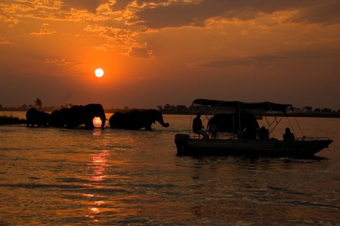 Elephants at sunset from the sunset cruise boat ride, Chobe river, Chobe National Park, Botswana