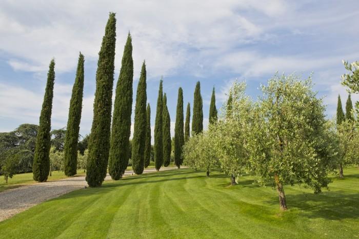 Castello del Nero - Jardim de ciprestes