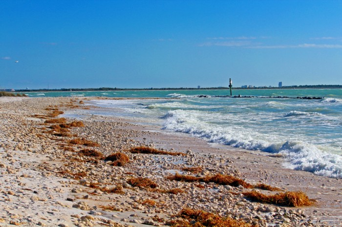 Beaches with waves coming in on Honeymoon Island, Clearwater Beach Skyline in the background