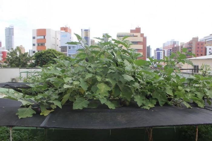 Horta Urbana do Vard Green