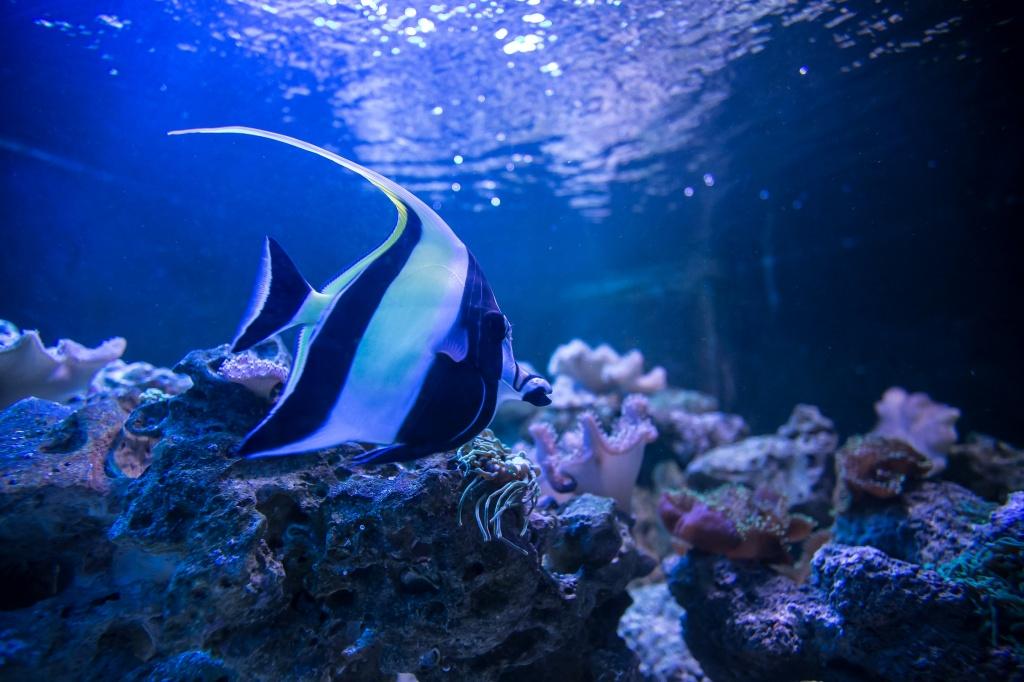 Peixes de diversas espécies