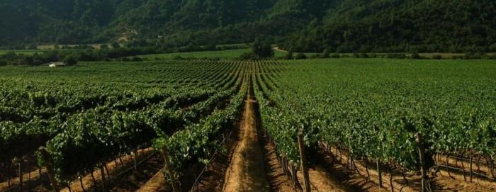 vinicola-emiliana-1