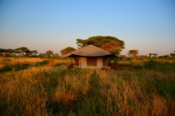 Luxury safari tent in the Serengeti during sunset, clear sky
