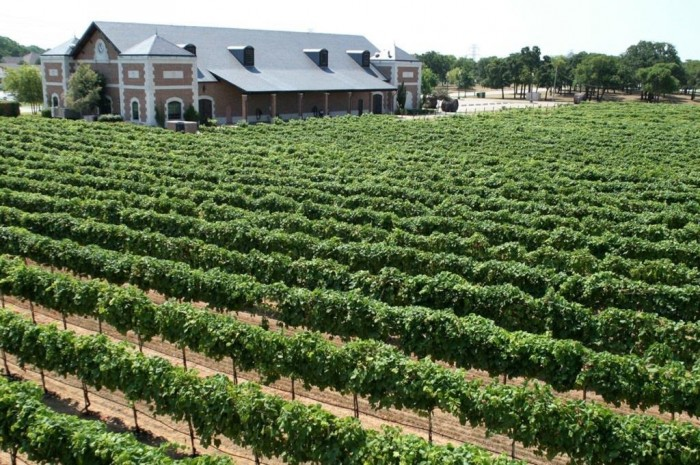 WINERY TASTING ROOMS - Delaney Vineyards.jpg