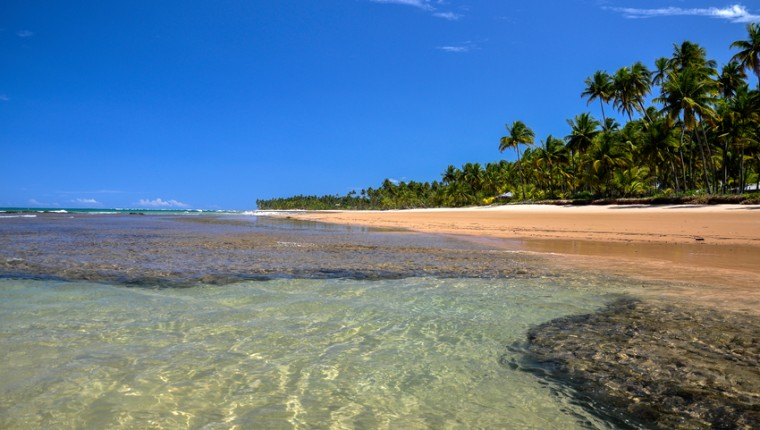 Beach at low tide with palms on background, Taipu de Fora - Bahia (Brazil)