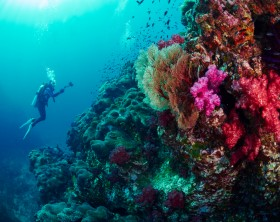 Scuba divers  with reef coral in the similan, Thailand