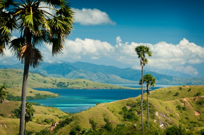 In search of the interesting but dangerous Komodo Dragon you must explore the hills and savannah areas of the island. Beautifully scenic but impossibly hot.