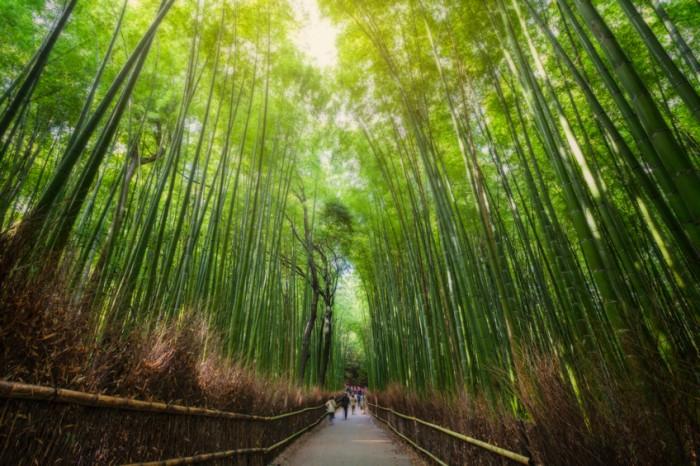Kyoto province, Japan.
