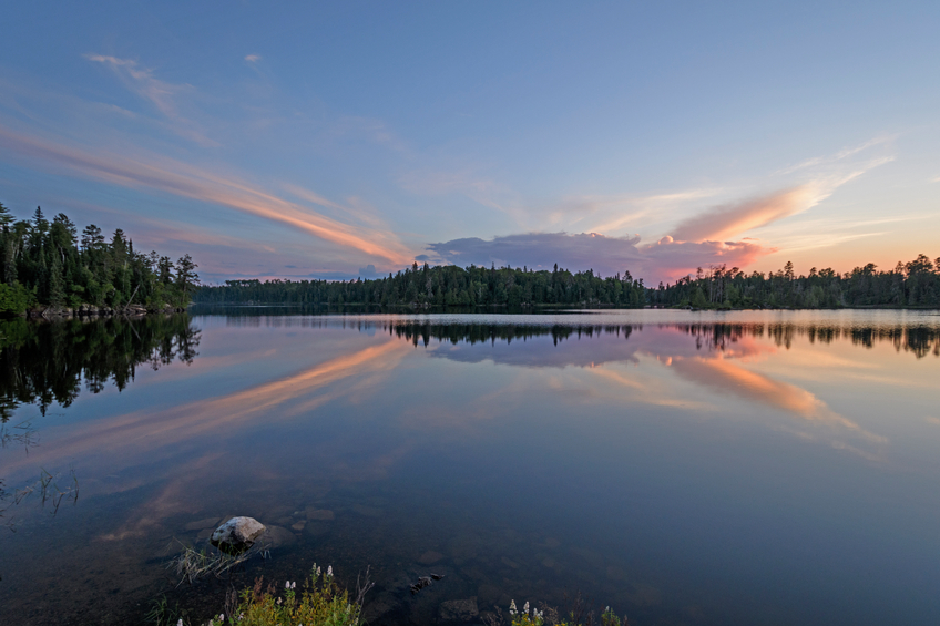 Foto por Istock/ Wildnerdpix