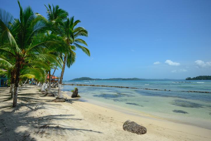 Palm trees on Carenero island in Bocas Del Toro, Panama