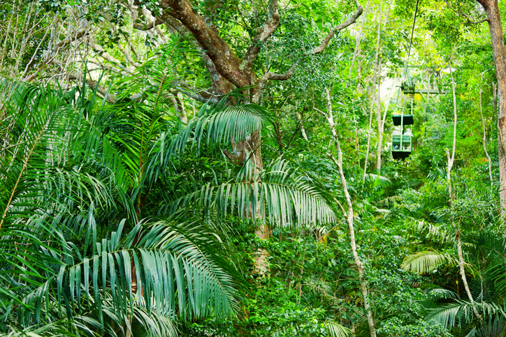 Tropical rainforest in Central America with an aerial tram.
