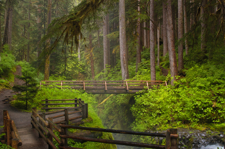 A boardwalk pathway and bridge spanning Sol Duc Falls in Olympic National Park, Washington USA