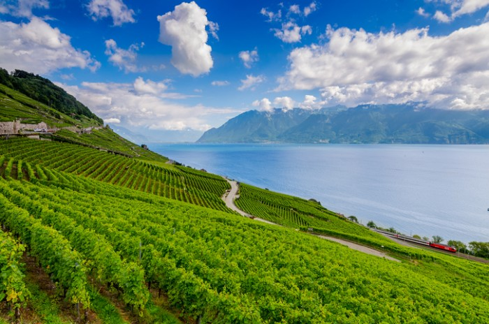 Picture of Lavaux region and lake Geneva in Switzerland.