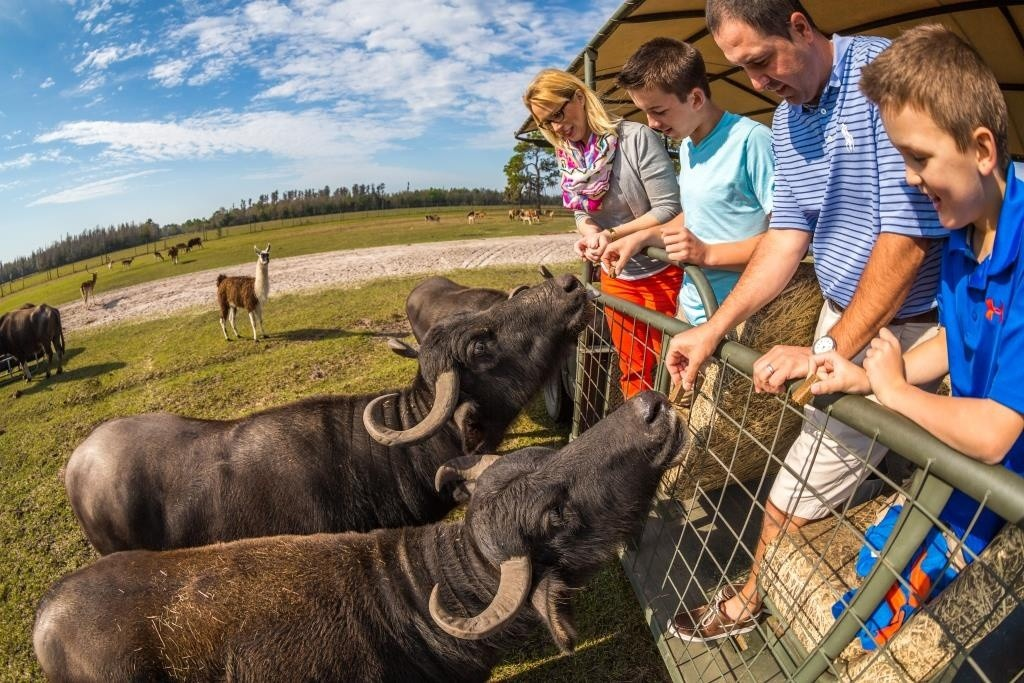 safari-wilderness-ranch-water-buffalo-feeding-family-feeds2