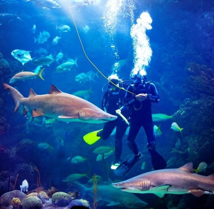 the_florida_aquarium_divers_in_coral_reef_cb4dd49d-67f7-4257-adce-4e47350381f8
