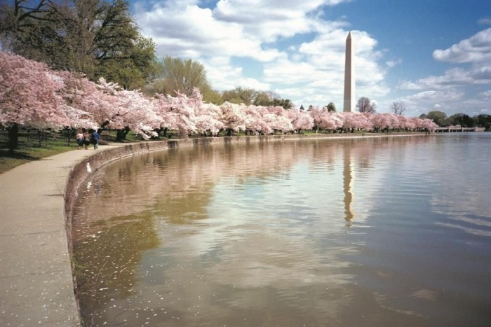 washington-monument-with-cherry-blossoms-e1484922120140