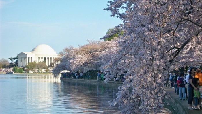 cerejeiras-1-1024x576