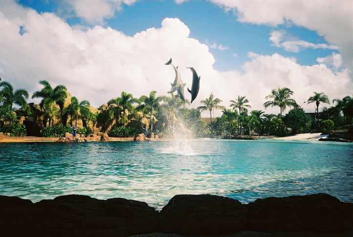 These are dolphins who jump and dance above little lake in zoo.