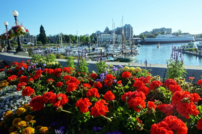Picture taken in inner harbour of Victoria,British Columbia,Canada.