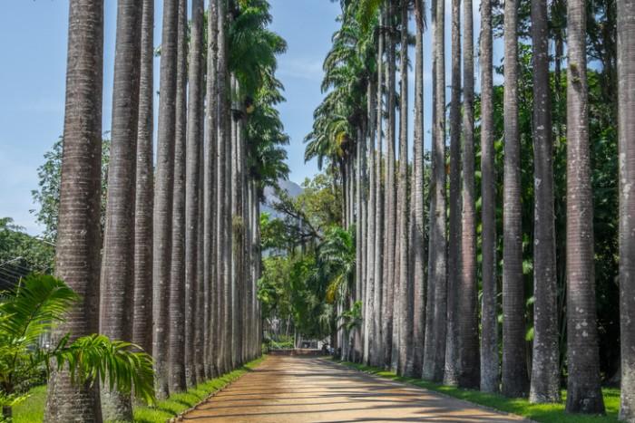 Palm Tree Path - Botanic Garden Rio de Janeiro, Brazil