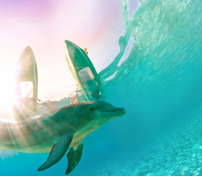 dolphin-cay_kayak