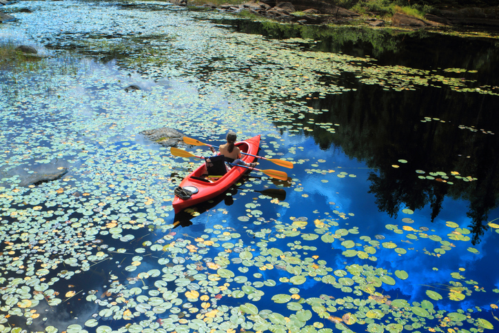 High angle view of the people canoeing in a beautiful lake with water lilies