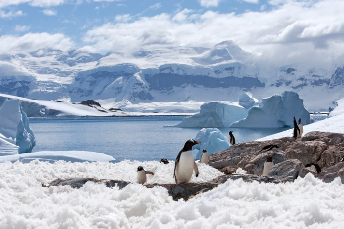 group of penguins with a blue iceberg bay