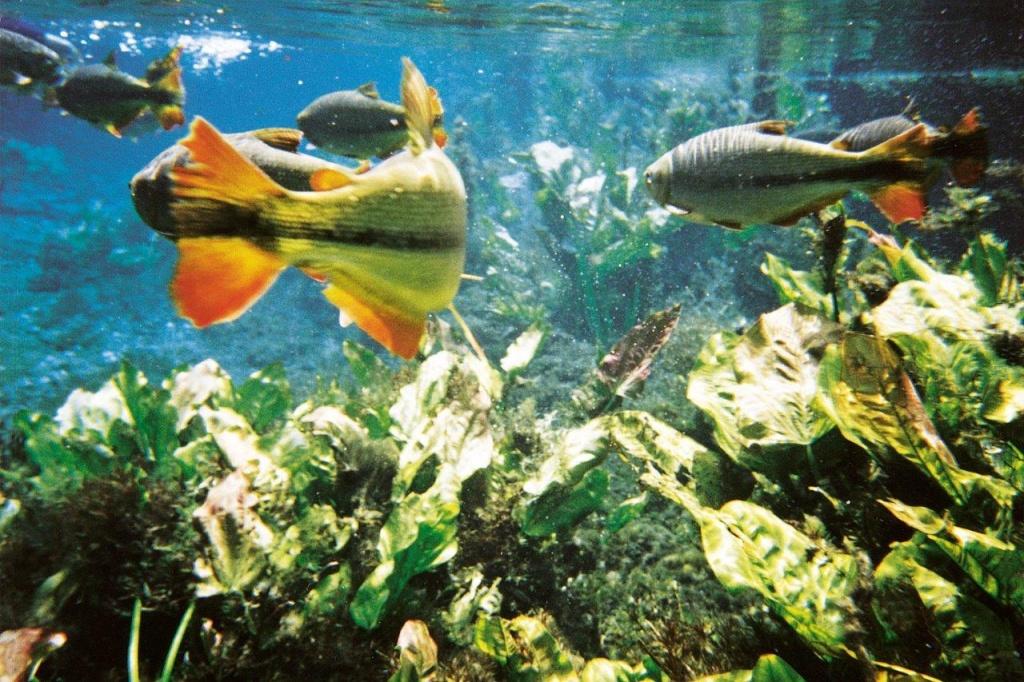 peixes-ana-laura-ravagnani