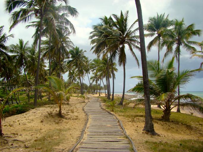 Brazilian Beach in Costa do Sau?pe, Bahia - Brazil
