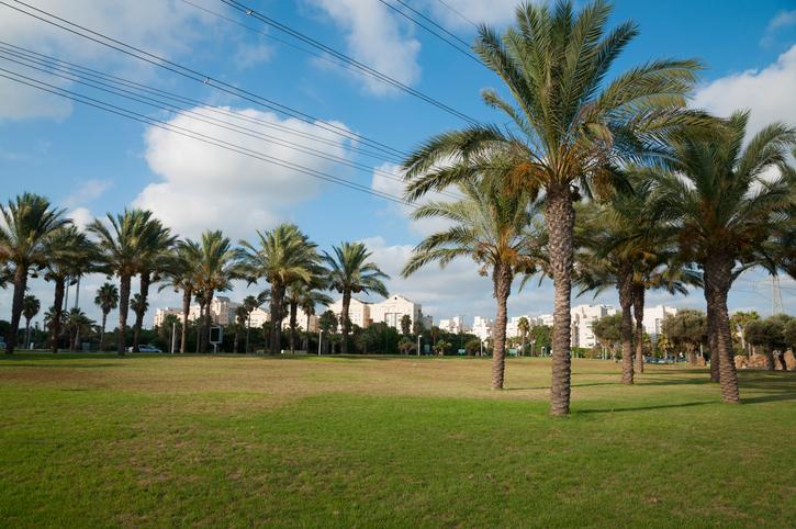 Park with Palm Trees, main Tel Aviv park.