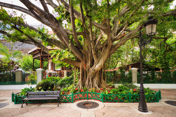 Urban cityscape of old San Juan, Puerto Rico, with an ancient tree, a lantern and a bench