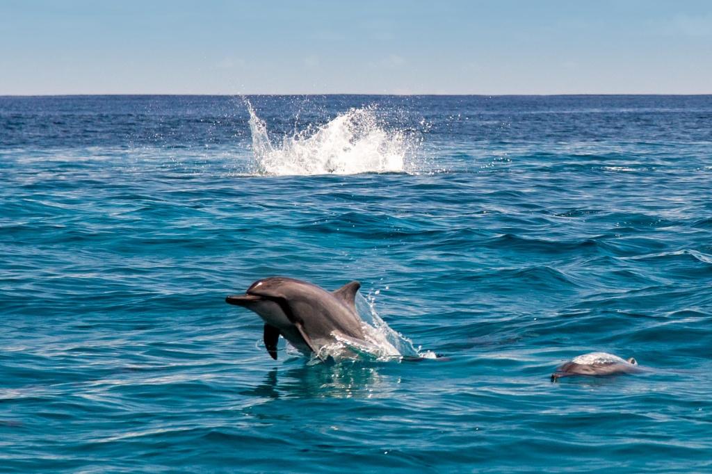 ai_dolphins_01 Divulgação/ VisiteSeychelles