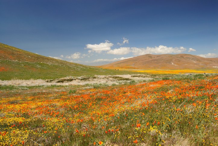 Scenics at Antelope Valley California Poppy Reserve